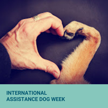 International Assistance Dog Week at Modern Practice Solutions